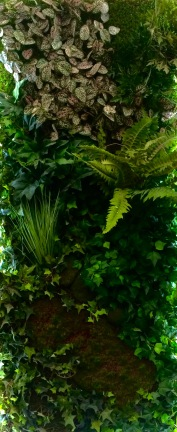 Real living wall. TLG