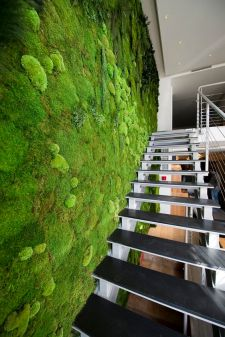Inside living wall. Pinterest